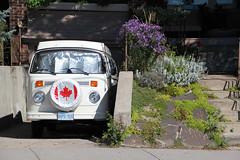 Happy 147th Birthday, Canada (Can Pac Swire) Tags: old red toronto ontario canada bus vw vintage emblem design symbol canadian mapleleaf van broadviewavenue happycanadaday aimg9911