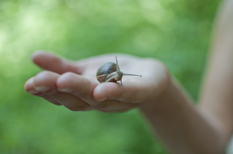 """Snail on hand<a href=""""http://www.flickr.com/photos/28211982@N07/14584256669/"""" target=""""_blank"""">View on Flickr</a>"""