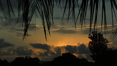 Storm clouds over the Gulf (Jim Mullhaupt) Tags: morning blue wallpaper sky orange storm color tree gulfofmexico weather silhouette yellow night clouds sunrise landscape nikon flickr florida palm manatee cumulus tropical coolpix sarasota bradenton p510 mullhaupt jimmullhaupt