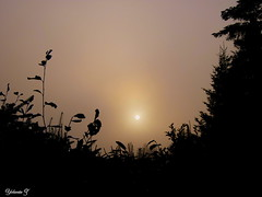 Misty morning (Yolanta Z) Tags: stagathe