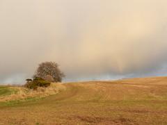 Heavy Shower, Alturlie, Inverness Feb 2017 (allanmaciver) Tags: rain sleet cold lone tree inverness alturlie highlands capital field farmer tracks walk shore allanmaciver
