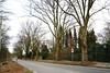 DSC_8632_01 (armin.54) Tags: platanen strasenbäume