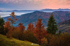 forest over foggy valley in autumn mountains-161611 (M. Pellinni) Tags: ifttt dropbox mountain fog landscape valley nature mist morning forest dawn sunrise beautiful view fall sky autumn cloud travel environment foggy peak background colorful green europe sunset ridge tree plant outdoor hill spectacular haze season fresh awake early light yellow bright majestic good calm