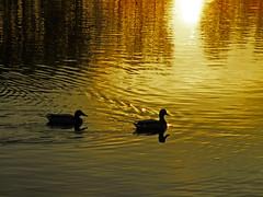 La mañana fresquita para un día primaveral (eitb.eus) Tags: eitbcom 32073 g1 tiemponaturaleza tiempon2017 primavera alava vitoriagasteiz joseantoniofernandezdeluco