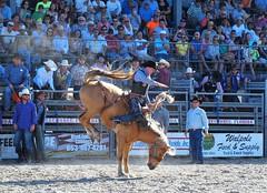 P3110225 (David W. Burrows) Tags: cowboys cowgirls horses cattle bullriding saddlebronc cowboy boots ranch florida ranching children girls boys hats clown bullfighters bullfighting