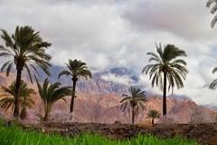 Esfahak, Iran (ellaraumo) Tags: canon wüste desert oase landschaft landscape esfahak iran