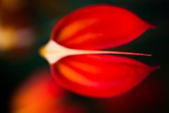 Consequences (Thomas Hawk) Tags: california conservatoryofflowers goldengatepark sanfrancisco usa unitedstates unitedstatesofamerica flower flowers fav10 fav25 fav50 fav100