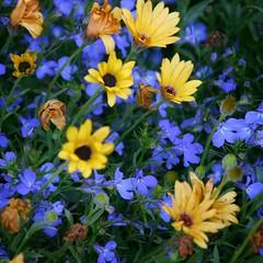 Flowers (Randy Spitzer) Tags: glensheen mansion duluth minnesota flowers