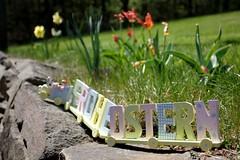 Happy Easter! (dididumm) Tags: happyeaster easterbunny train wood wooden meadow green sky blue sunshine spring flowers tulip tulips tulipa red daffodil yellow white weiss gelb narzisse osterglocke rot tulpe tulpen blumen frühling sonnenschein blau himmel grün wiese holz ausholz hölzern zug bahn osterhase osterhäschen froheostern
