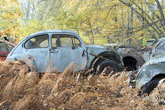 VW Graveyard (Explore) (Jonnie Lynn Lace) Tags: abandoned america american car cargraveyard vw volkswagen beetle naturetakesover nature tree trees decay exterior derelict graveyard urbex rust rusty red blue orange yellow green teal colour colorful colours natur bright shadow shadows sunlight light day art flickr digital nikkor nikon d750 24mm fall leaves autumn old auto history rural detail textures northeast