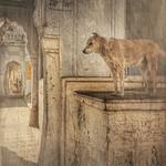 India series .. The Temple guard thumbnail