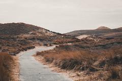Inselwege (Gruenewiese86) Tags: amrum landschaft urlaub landscape weg wege nature natur düne dünen dünenwege