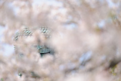 20170415-DS7_5428.jpg (d3_plus) Tags: 歴史的建造物 歴史 thesedays kamakura aiafzoomnikkor80200mmf28sed d700 hiking 80200mmf28d 風景 日常 80200mmf28 tele 晴れ daily zoomlense shrine 空 望遠 bokeh 自然 寺 景色 ancientcity history trekking 神奈川県 sky 寺院 80200mm japan nikon ニコン 鎌倉 walking dailyphoto ハイキング historicmonuments 80200mmf28af kanagawa flower buddhisttemple shintoshrine 8020028 nature temple 植物 fine 散歩 古都 nikond700 花 scenery plant ズーム 神社 トレッキング nikkor 80200 日本 bloom fineday telephoto ボケ