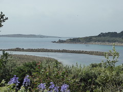 18 April 2017 Scilly (35) (togetherthroughlife) Tags: 2017 april scilly islesofscilly