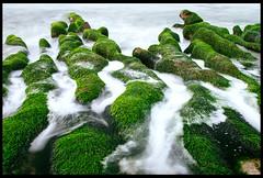 Green Reef. (ykpopy2011) Tags: pentax pentaxfa2870f28al fa 2870 f28 taiwan taipei laomei reef greenreef green sea seaweed velvia 老梅 石槽 老梅石槽 landscape seascape 風景 longexposure beach