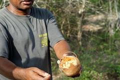 DSC07436_DxO Frucht des Baobab_Bildgröße ändern (Jan Dunzweiler) Tags: madagaskar africanbikers reniale renialareserve jandunzweiler baobab affenbrotbaum