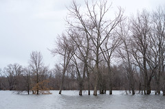 Annual Spring Flood, The Oxbow (Bill McBride) Tags: newengland spring flood landscape easthampton river nature water connecticutriver outdoors massachusetts pioneervalley oxbow