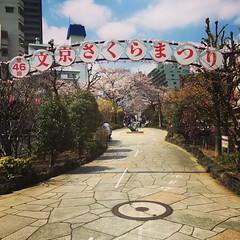 早安。 #Tokyo #japan #播磨中央公園 #播磨坂 (里卡豆) Tags: instagramapp square squareformat iphoneography uploaded:by=instagram mayfair
