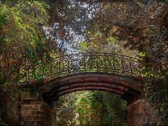 Petit Pont du Bois (jeanfenechpictures) Tags: pont bridge puente forêt forest bosque arbres trees trianon versailles parc park parque exterieur outside fuera france jardin garden jardín