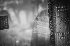 Inter-dimensional portal (frattonparker) Tags: nikond810 tamron28300mm raw lightroom6 monochrome frattonparker btonner cemetery isleofwight ventnor fog mist haar tombstones dew web silk bokeh marble granite cross