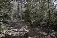 Senderos 1 (CarlosJ.R) Tags: sanjuandelapeña pirineos españa huesca aragón bosque sendero