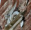 ...un leone sulla torre.... (antosti) Tags: italia veneto castelfrancoveneto torre civica leone marciano marmo comune nikon d70s mattoni leonealato