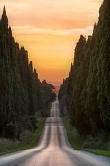 Cypress road (| MI CHI |) Tags: bolgheri chianti avenue road tuscan tuscany italy europe tree sunset cypress cypresses cipressi hill