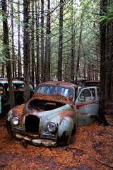 IMG_2754 (Irina Souiki) Tags: rusty crusty cars mcleansautowreckers milton ontario old oldcars