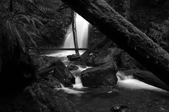 Seeing beyond...... (McCoy352) Tags: creek waterfall blackandwhite fern details darkish olympics washington olympicpeninsula water forest trees timber