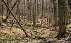 Spring Carolinian Forest (otterman51) Tags: brucetrail canada carolineanforest grimsby landscape ontario tree escarpment forest nature niagara niagaraescarpment outdoors photography