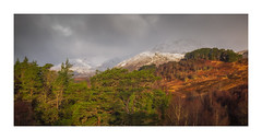 Fresh Snow Fall (Vemsteroo) Tags: sgurrnalapaich mountain snow storm morning sunrise trees forest caledonainpines scotspines pines spring winter canon 5d mkiii 2470mm circularpolariser leefilters stormy wild dramatic outdoors scotland visitscotland affric lochaffric