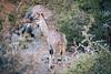 Kudu II