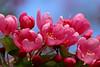 wonderful spring (dr.larsbergmann) Tags: natureandnothingelse fantasticnature naturemasterclass greatphotographers canon eos photography photo flickr flowers languageofflowers flower blossom blooming
