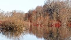 Spring Colours (Boganeer) Tags: jemseg foliage dogwood reflection printemps spring wetland water freshet nature newbrunswick nouveaubrunswick maritimes maritime atlanticcanada canonxti canont3i canada canonrebelt3i meltwater