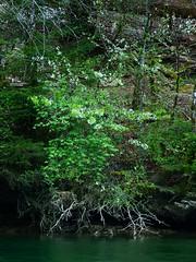 Gorges du Doubs (jools_b) Tags: doubs gorge sony a900