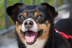 Fragola (39Leon) Tags: portrait dog animal cane cagnolino 60d canon60d