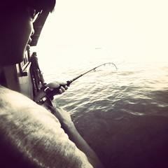 #fishing #stingray #malaysia #visitmalaysia (ag arora) Tags: fishing stingray malaysia visitmalaysia