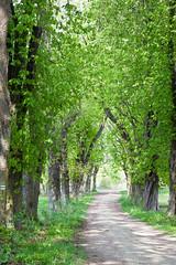 fresh green :) (:: Blende 22 ::) Tags: trees sun green canon germany deutschland thringen spring alley path thuringia rays grn sonne bume sonnenstrahlen weg frhling allee eichsfeld ef24105mmf4lisusm canoneosd canoneos5dmarkii
