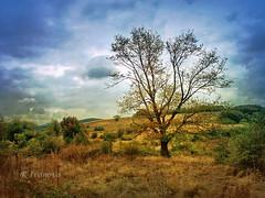 Aquarelle (R_Ivanova) Tags: nature landscape colors tree textured sony blue sky yellow summer bulgaria риванова rivanova amazingwork