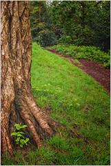 Footpath to the Heath. (Mikec77) Tags: spring hampsteadheath footpath