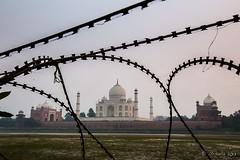 Razor Wire at the Back of the Taj 7777 (Ursula in Aus) Tags: india taj tajmahal agra unesco rajasthan uttarpradesh earthasia