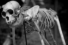 Skeleton (Myltsi) Tags: history museum finland skeleton helsinki nikon natural d7100