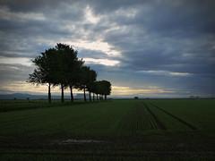 SKINFLATS (kenny barker) Tags: trees landscape scotland skinflats kennybarker