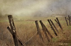 Rural Maine (Karin Pinkham Photography) Tags: fog rural fence maine textures rainy ellsworth hancockcounty karinpinkham karinpinkhamphotography