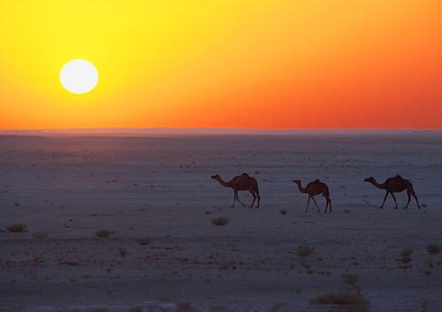 Jebel Sifah desert