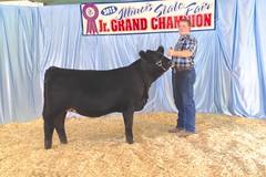 "Class winner IL State Fair Jr Show '12 • <a style=""font-size:0.8em;"" href=""http://www.flickr.com/photos/25423792@N05/14251793878/"" target=""_blank"">View on Flickr</a>"