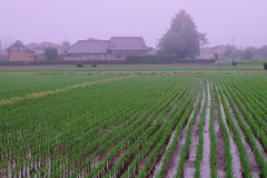 Farmers in the Mist (Kazuo Ishikawa2014) Tags: world road light cloud sun color bird love beautiful japan fog hope cool wind time walk farm dream run silence