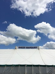 Sheep Marquee (Deydodoe) Tags: show uk blue sky cloud white clouds marquee sheep farm farming bluesky tent agriculture livestock hertfordshire iphone herts 2014 hertscountryshow
