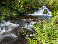 Babbling Brook (Mox Pix) Tags: water stream ferns scenicwater