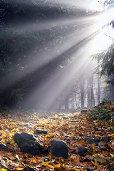 Sunlight in the fog (Myslitel) Tags: wood morning autumn trees light wild plants sun sunlight mist color tree green nature sunshine misty fog mystery forest sunrise season landscape daylight leaf scenery shine natural path branches foggy sunny foliage mysterious environment rays through magical shining forests wooded